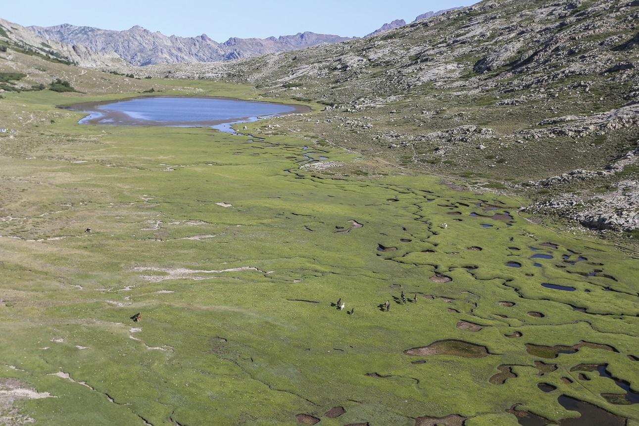 Lac de Ninu, pozzines et chevaux sauvages